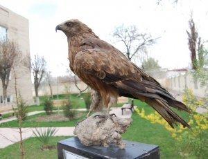 Фото Государственный музей природы Узбекистана