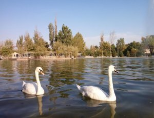 Фото Центральный парк развлечений в Ташкенте