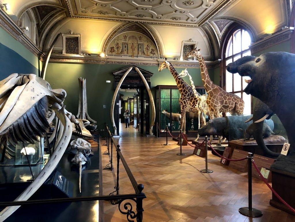 получить римский музей в вене фото перезревшие грибы уже