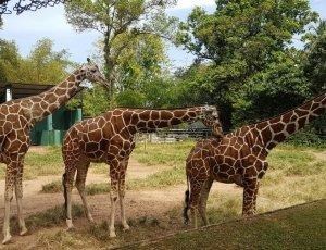 Фото Национальный Зоопарк в Коломбо
