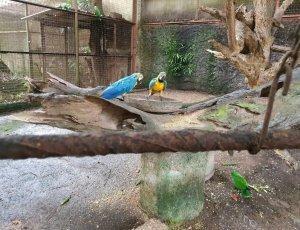 Парк птиц «G.L.P»