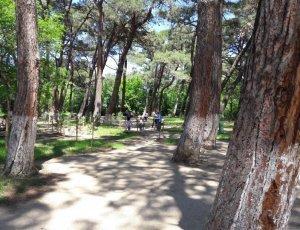 Дигомский парк