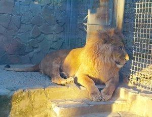 Зоопарк «Мадагаскар»