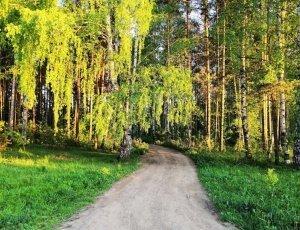 Лесопарк имени лесоводов России