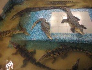 Ферма крокодилов «Крокодилвиль»
