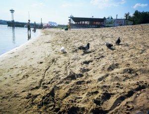 Фото Ждановский пляж