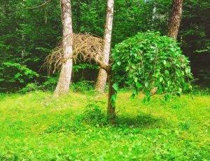 Ботанический сад Подолье