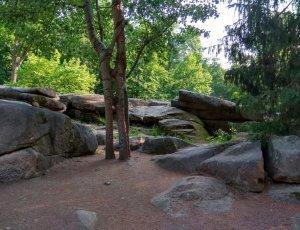Семейное дерево парка Софиевка