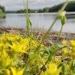Фото Краснохолмское озеро 8