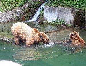 Парк Бурых медведей «Беренграбен»