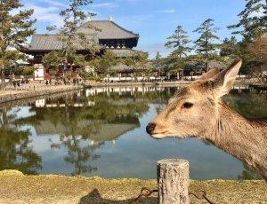 Парк с оленями «Нара»