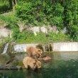 Фото Парк Бурых медведей «Беренграбен» 7