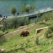 Фото Парк Бурых медведей «Беренграбен» 5