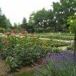 Фото Сад Роз в Берне 9