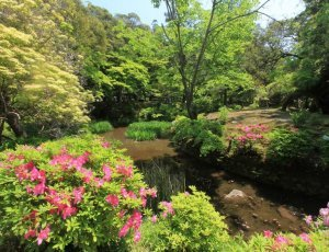 Ботанический сад «Kasugataisha Manyo»