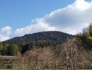 Гора Мива