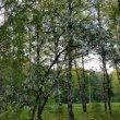 Фото Парк имени Калинина в Уфе 6