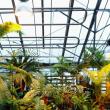 Фото Ботанический сад ПГНИУ 9