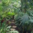 Фото Ботанический сад ПГНИУ 7