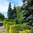 Фото Ботанический сад ПГНИУ 8