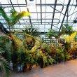 Фото Ботанический сад ПГНИУ 6