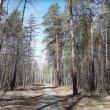 Фото Пруд в Балатовском парке 7
