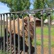 Фото Абаканский зоопарк 8