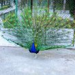 Фото Абаканский зоопарк 7