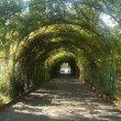 Фото Ботанический сад в Ереване 9