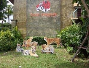 Фото Зоопарк «Королевство тигров»