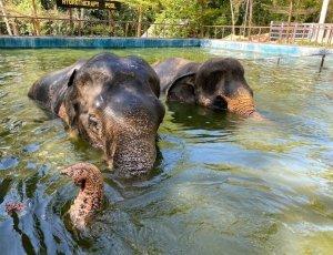 Заповедник слонов