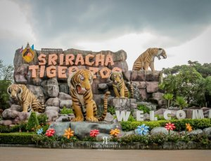 Тигриный зоопарк Сирача