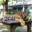 Фото Зоопарк «Королевство тигров» 9