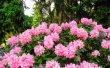 Фото Ботанический сад в Харькове 7
