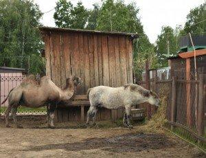 Фото Зоопарк «Лесная сказка»