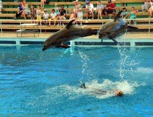 Аксуский дельфинарий
