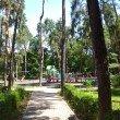 Фото Сосновый парк в Алматы 7