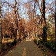 Фото Сосновый парк в Алматы 8