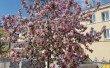 Фото Сквер Молодоженов в Калуге 1