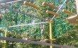 Фото Чудо-Парк в Электростали 2