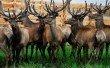 Фото Парк животных ледникового периода в Белокурихе 7