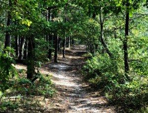 Светлогорский лес