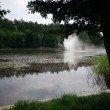Фото Озеро Тихое в Светлогорске 4