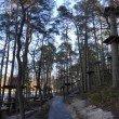 Фото Светлогорский лес 4
