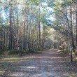 Фото Светлогорский лес 9