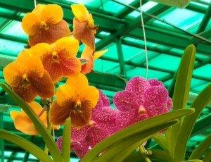 Музей орхидей
