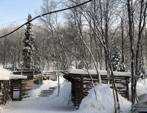 Фото Питомник хаски «Улыбка Аляски»