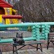 Фото Памятник коту Семену 4