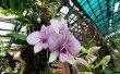 Фото Музей орхидей 2