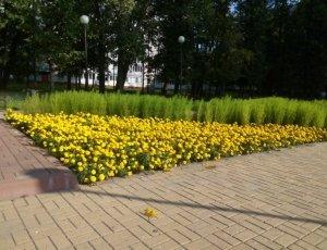 Фото Сквер имени Петра Кузьмича Гайдукова